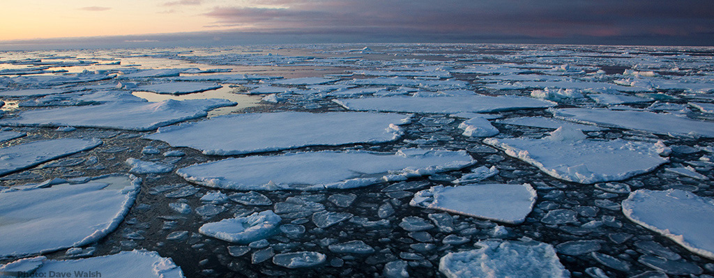 Pancake ice on Arctic Sea Ice: Dave Walsh Photography